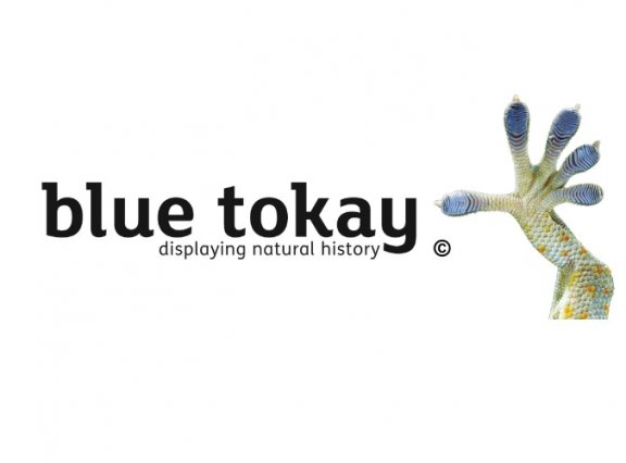 New AIM Associate Suppliers: Blue Tokay Ltd