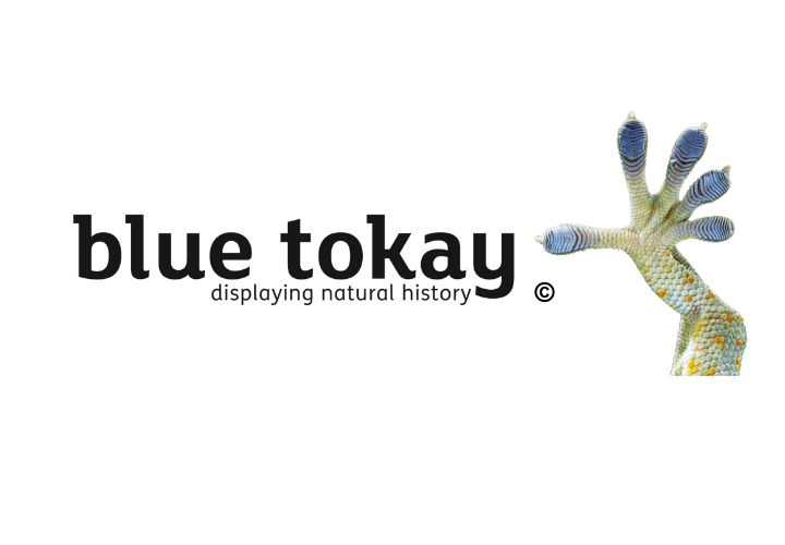 Visit Blue Tokay Ltd website